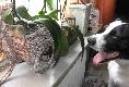 zwei Zilpzalp und der Hund Toby